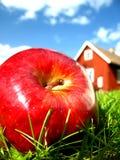 Apple no jardim 1 Fotos de Stock