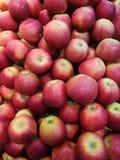 Apple no ` s do fazendeiro introduz no mercado Imagens de Stock Royalty Free