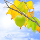 Apple in november. Green apple on a lake in november Stock Images