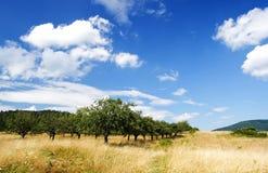 Apple-Obstgarten Lizenzfreie Stockfotos