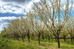 Apple-Obstgarten Lizenzfreie Stockbilder