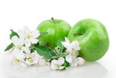 Apple och äppleblomning Arkivbild