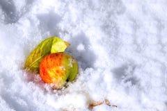 Apple och blad under första snö Royaltyfri Bild