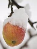 Apple och snow Arkivbild