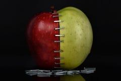 Apple OGM ΙΙ Στοκ Φωτογραφίες
