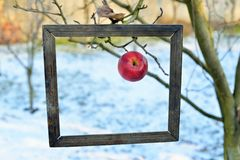 An apple in a old photo frame Royalty Free Stock Photo