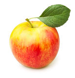 Apple one Royalty Free Stock Image