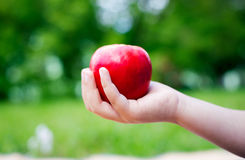 Apple in one hand. Hand holding a red apple on nature background royalty free stock image