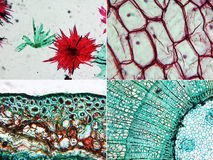 Apple, Onion and Pine Wood micrograph Stock Photos