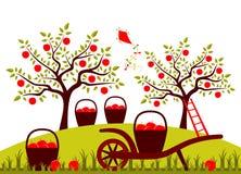 Apple-oogst royalty-vrije illustratie