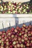 Apple-Oogst Stock Foto