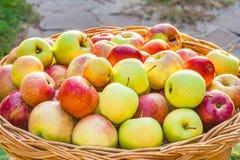 Apple-oogst in een rieten backlit mand, Stock Fotografie