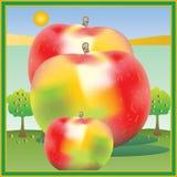 Apple-oogsttijd Royalty-vrije Stock Fotografie
