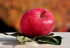 Apple op bladeren Royalty-vrije Stock Fotografie