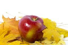 Apple op een witte achtergrond met gele bladeren Royalty-vrije Stock Fotografie
