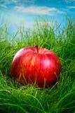 Apple op het gras Stock Foto's