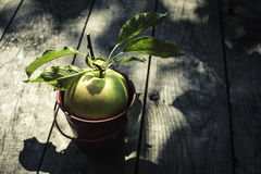 Apple op hout Royalty-vrije Stock Afbeelding