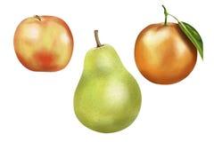 Apple, Orange, & Pear Illustration Stock Photos