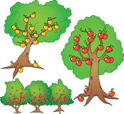 Apple, orange tree and berry bush. Cartoon illustration set Stock Photos