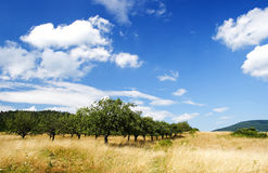 Apple Orchard Royalty Free Stock Photos
