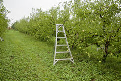 Apple orchard Stock Photos