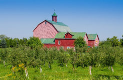 Apple orchard and barn Stock Image