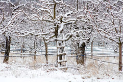 Apple orchard covered with snow Stock Images