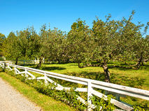 Apple orchard Royalty Free Stock Images