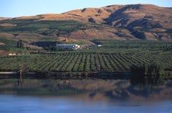 Apple Orchard, eastern Washington. An apple orchard along the Okanogan River near Omak in Washington State royalty free stock photo