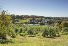 Apple Orchard in the fall Royalty Free Stock Photography