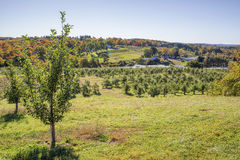 Apple Orchard in the fall Stock Photos