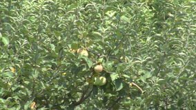 Apple orchard on the farm museum in Vanga Rupite, Bulgaria. Temple of Saint Petka built Vanga stock footage