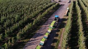 Apple orchard, harvest of apples, tractor carries large wooden boxes full of green apples, top view, aero video stock video footage