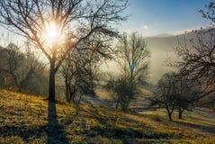 Apple orchard on hillside at autumn sunrise Stock Photo