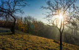 Apple orchard on hillside at autumn sunrise Royalty Free Stock Images