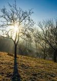 Apple orchard on hillside at autumn sunrise Royalty Free Stock Image