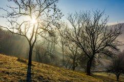 Apple orchard on hillside at autumn sunrise Stock Photos