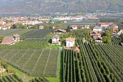 Apple Orchard in Italy Stock Photography