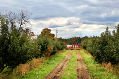 Apple Orchard. Landscape view of an apple orchard Stock Photography