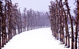 apple orchard mist an snow Stock Images