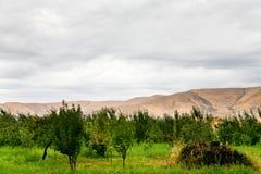 Apple orchard on mountain plateau Stock Image