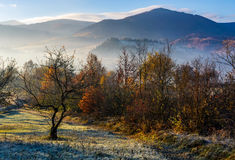 Apple orchard in mountains at autumn sunrise Royalty Free Stock Photos