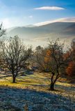Apple orchard in mountains at autumn sunrise Royalty Free Stock Photography