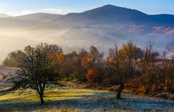 Apple orchard in mountains at autumn sunrise Royalty Free Stock Photo