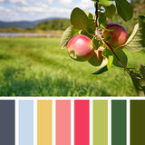 Apple orchard palette Stock Photos