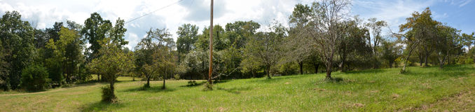 Apple orchard. Panoramic view of a small Apple orchard full of very old trees Royalty Free Stock Photos