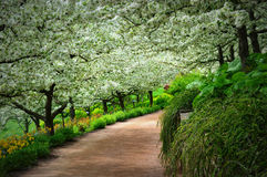 Apple Orchard. An apple orchard pathway at the Chicago Botanical Gardens in Glencoe, IL Royalty Free Stock Photo