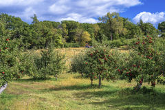 Apple orchard and pumkin patch Stock Images