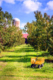 Apple orchard. Rows of apple trees at an orchard in Central Kentucky in fall Royalty Free Stock Photos