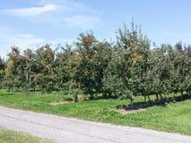 Apple Orchard Stock Photos